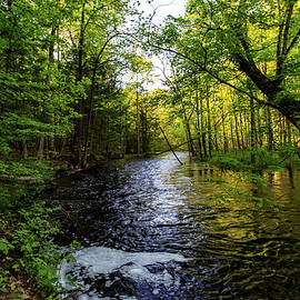 Summer Stream by Neal Nealis