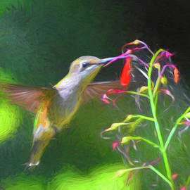 Summer Visitor by Jerry Griffin