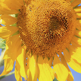 Summer Yellow by Alexa Keeley