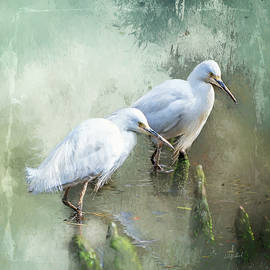 Summers Day Egret by Anita Hubbard