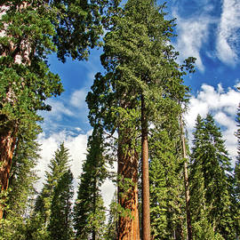Summers day in Sequoia NP by Steven Sutter