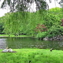 Summertime in Boston Public Garden by Lyuba Filatova