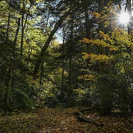 Sun Burst Linn Run State Park by Michael Hills