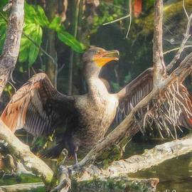 Sun Dried Cormorant by Kathi Isserman