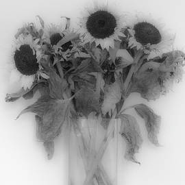 Sun Flowers by Clive Beake