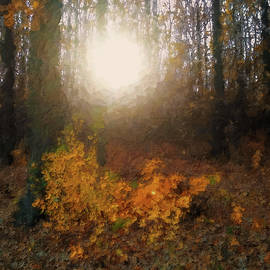 Sun in the Autumn Forest by Alex Mir