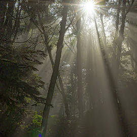 Sun Rays in the Morning Light