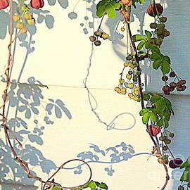 Sun Stencils by Nancy Kane Chapman