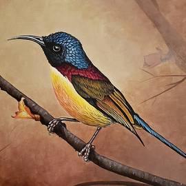 Sunbird by Pam Kaur
