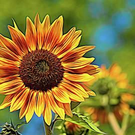 Sunburst Sunflower by Maria Keady