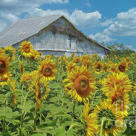 Sunflower Barn Yellow Springs Ohio by Teresa Jack