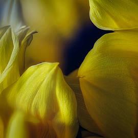 Sunflower Bouquet Macro #2 by Stuart Litoff