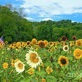 Sunflower Diversity and Harmony by Regina Geoghan