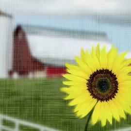 Sunflower Farm by Patti Deters
