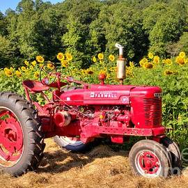 Sunflower field and tractor by Charlene Cox