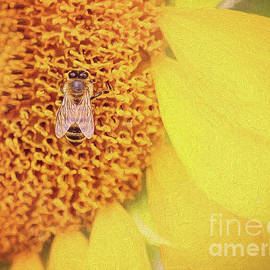 Sunflower Nectar  by Sharon McConnell