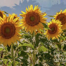 Sunflower Sentinels by John Bartelt