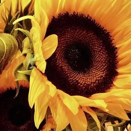 Sunflower Smiles by Arlane Crump