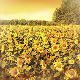 Sunflowers #3 by Slawek Aniol