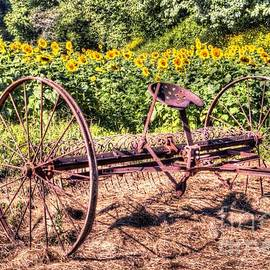 Sunflowers Antique hay rake by Charlene Cox
