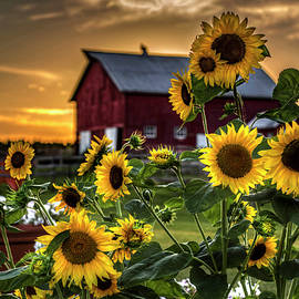 Sunflowers At Sunset by Ray Congrove