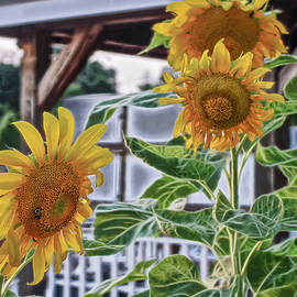 Sunflowers at the Marina by Cordia Murphy