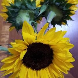 Sunflowers by Yenni Harrison