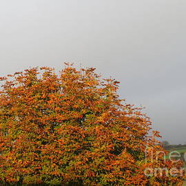 Sunlight On Autumn by Lesley Evered