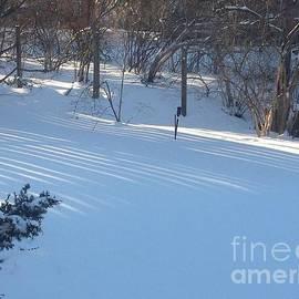 Sunlight on Snow by Nancy Kane Chapman