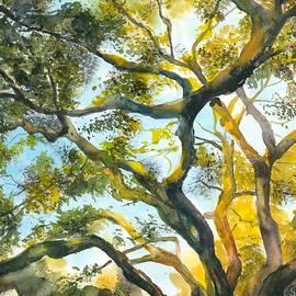 Sunlight on Tree by Hiroko Stumpf