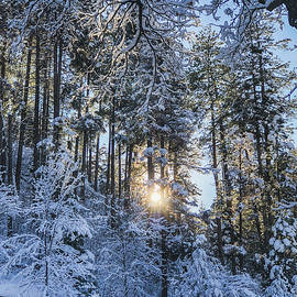Sunlight, Shadows, and Snow by TL Wilson Photography by Teresa Wilson