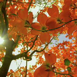 Sunlight through flowers and leaves by Jeff Swan