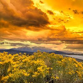 Sunny Sunset on the road by Randall Branham