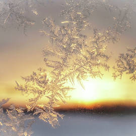 Sunrise and Frost by Susan Hope Finley