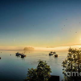 Sunrise and Seagulls by Alana Ranney