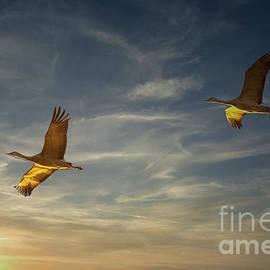 Sunrise Flight of the Sandhill Cranes by Priscilla Burgers