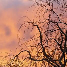 Sunrise in Gilbert 0849-021420-1 by Tam Ryan