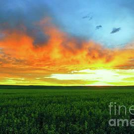 Sunrise on a North Dakota wheat feild by Jeff Swan