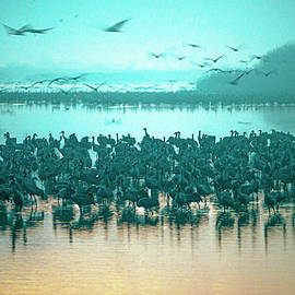 Sunrise over the Hula Valley Israel 3 by Dubi Roman