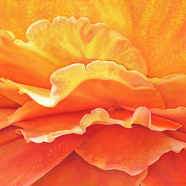 Sunshine Rose by Sandy Haight
