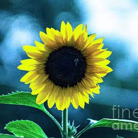 Sunrise Sunflower 7-13-2021 by Gary Shindelbower
