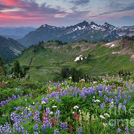 Sunrise with Wildflowers Overlooking Tatoosh Mountains in Mount Rainier National Park  by Tom Schwabel