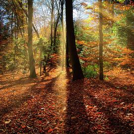 Sunrays In The Forest by Jan Fijolek