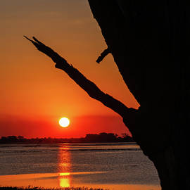 Sunset 1, Chobe River by MaryJane Sesto