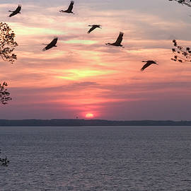 Sunset and Birds at Kentucky Lake by James C Richardson