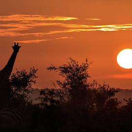 Sunset and Giraffe by MaryJane Sesto