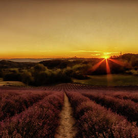 Lavender fields at sunset Italy by Rita Di Lalla