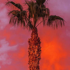 Sunset And Palm Tree by Robert Bales