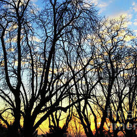 Sunset And Trees Silhouettes by Jasna Dragun