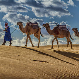 Sunset Camels and Shadows by Lindley Johnson